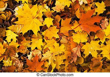 feuilles, coloré, fond, automne