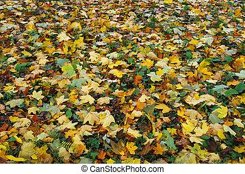 feuilles, coloré, fond