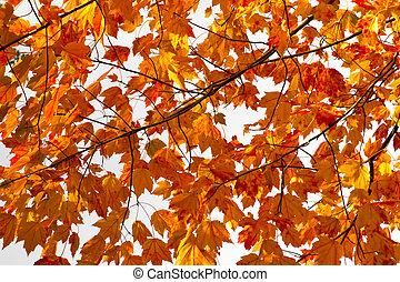 feuilles, coloré, fond, texture, automne