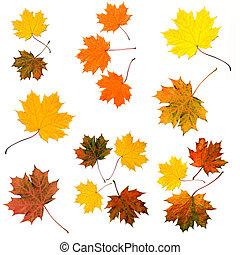 feuilles, coloré