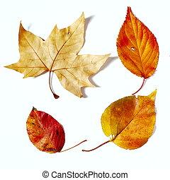 feuilles, couleur, automne
