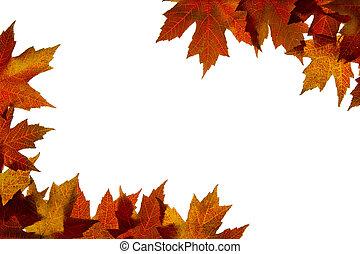 feuilles, couleurs chute, 4, backlit, mélangé, érable