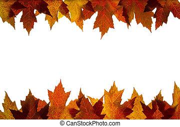 feuilles, couleurs chute, 5, backlit, mélangé, érable