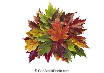 feuilles, couronne, automne, couleurs, automne, mélangé, érable