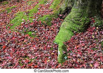 feuilles, croissant, automne, racine, arbre, couleur, mousse