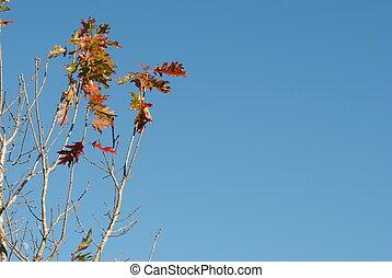feuilles, dans, les, ciel