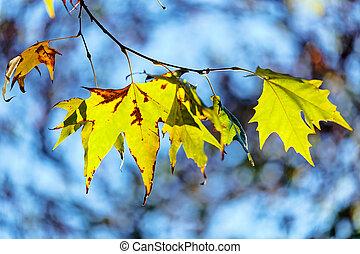 feuilles, dans parc