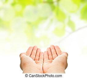 feuilles, enfant, arrière-plan vert, mains, prise, sur