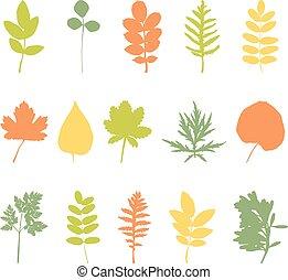feuilles, ensemble, éléments