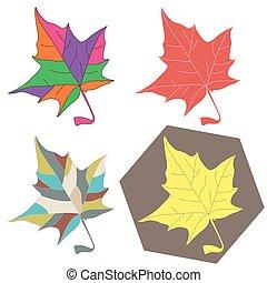 feuilles, ensemble, érable