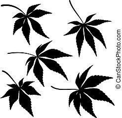 feuilles, ensemble, érable, pictogramme