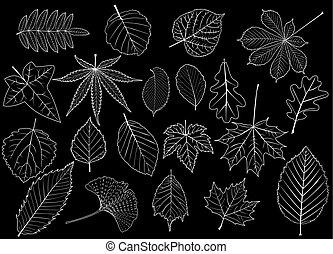 feuilles, ensemble, arbre
