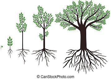 feuilles, ensemble, arbres