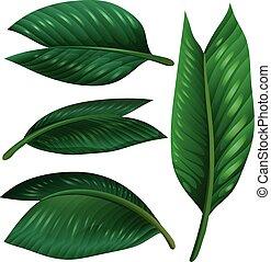 feuilles, ensemble, blanc vert, fond