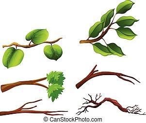 feuilles, ensemble, branches