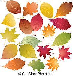 feuilles, ensemble, coloré
