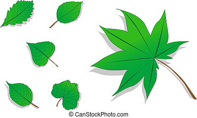 feuilles, ensemble