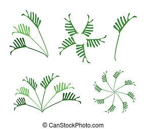 feuilles, ensemble, fond, philodendron, blanc