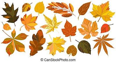 feuilles, ensemble, isolé