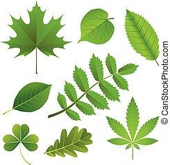 feuilles, ensemble, vert