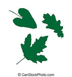 feuilles, ensemble, vert, isolé