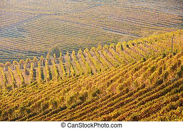 feuilles, ensoleillé, jaune, vignobles, diminuez jour