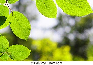 feuilles, et, copyspace