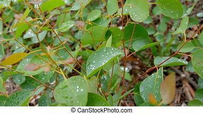 feuilles, fin, 4k, haut, pluie