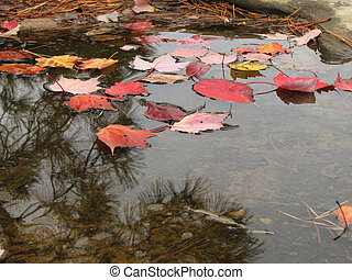 feuilles, flaque