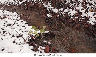 feuilles, flotteur, baissé, forêt, ruisseau