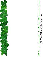 feuilles, fond, lierre, vert, anglaise, cadre, blanc