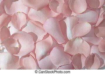 feuilles, fond, rose