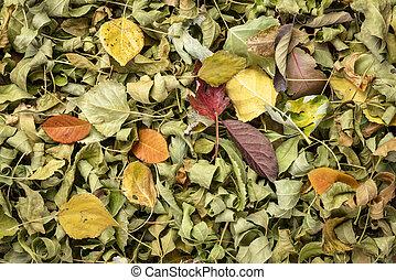 feuilles, fond, sec, automne, coloré