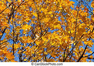 feuilles, fond, texture, automne