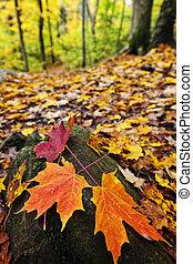 feuilles, forêt, automne