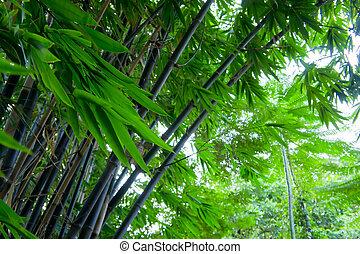 feuilles, forêt, bambou, soufflé