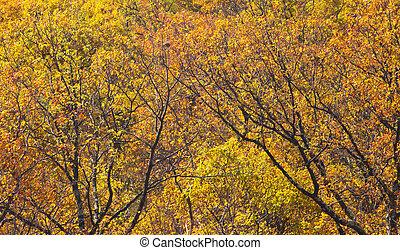 feuilles, forêt, jaune, automne