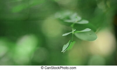 feuilles, forêt verte, rosée