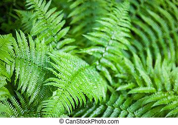 feuilles, fougère, vert, tiges