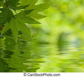 feuilles, foyer peu profond, refléter, eau verte