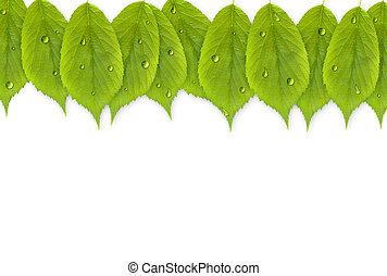 feuilles, frais, fond