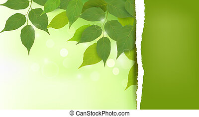 feuilles, frais, fond, vert, nature