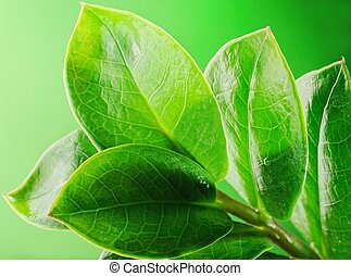 feuilles, frais, vert