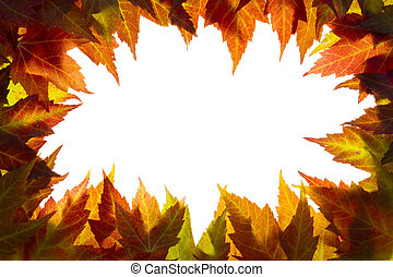 feuilles, frontière, blanc, érable, automne