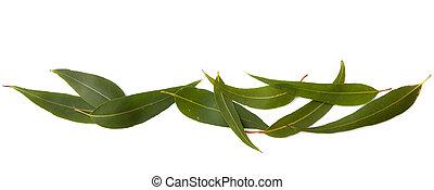 feuilles, frontière, gencive