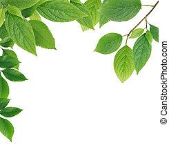 feuilles, frontière