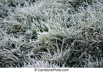 feuilles, gelée, vert, cristaux, givre, herbe