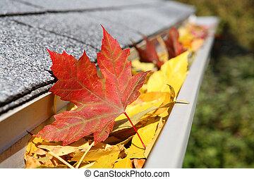 feuilles, gouttière, pluie, entiers