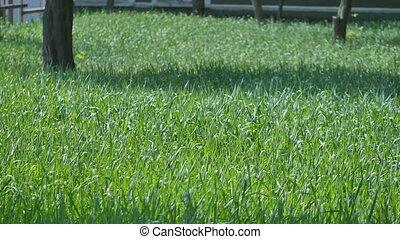 feuilles, herbe, vert, vent