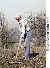 feuilles, homme, sec, nettoie, personnes agées, râteau
